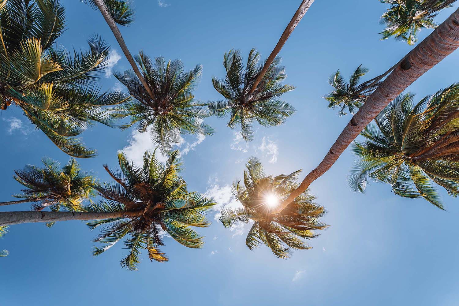 blue-sky-and-top-of-palm-trees-with-sunlight-backg-YULYGFX